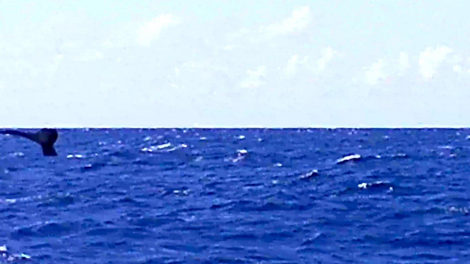 クジラの画像 p1_24
