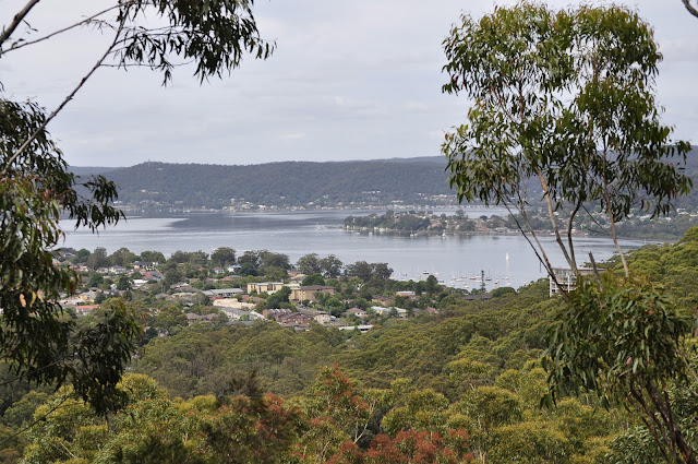 View of Brisbane Water from Flannel Flower track