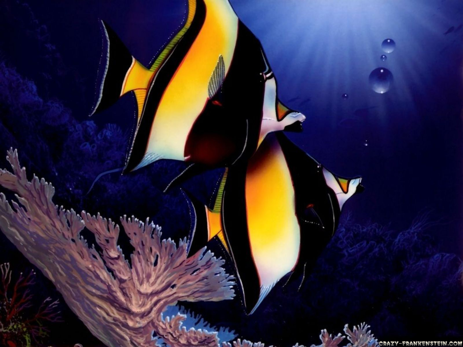 fish wallpaper hd wallpapers widescreen desktop