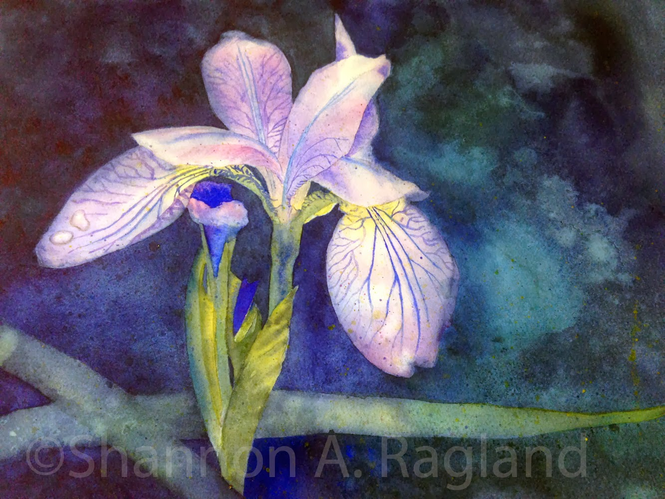 Blue Iris, a Watercolor by Shannon A. Ragland