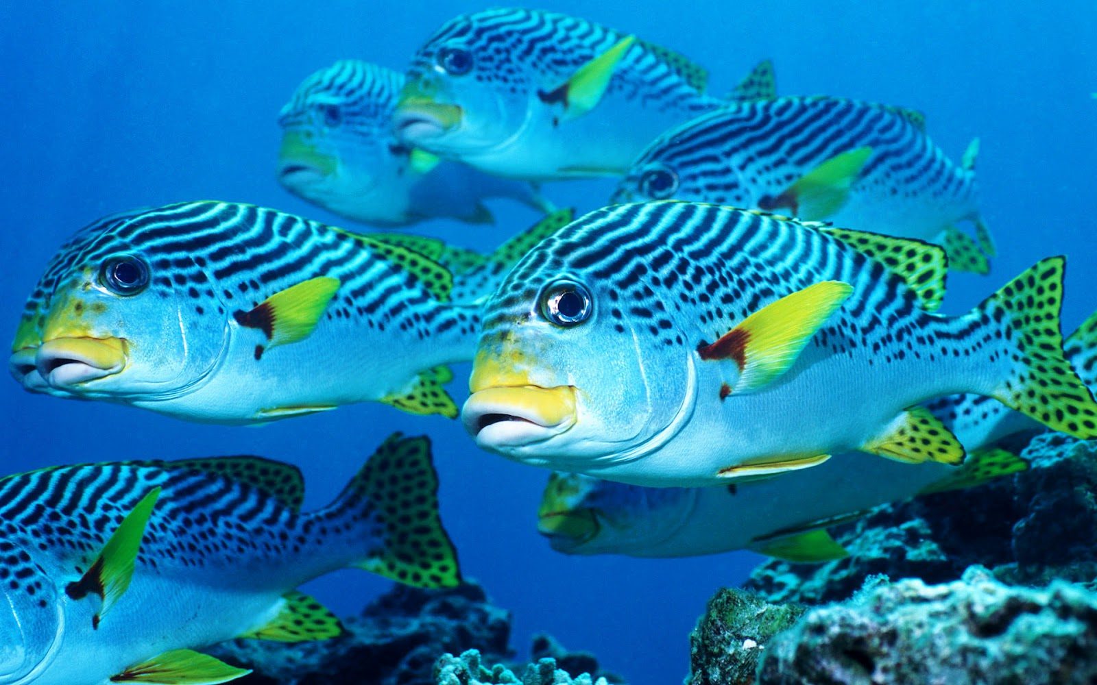 Pictures of fish ocean wallpapers chapter 2 hd animal for Wallpaper fish in water