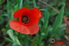 Les fotos de la Cèlia.