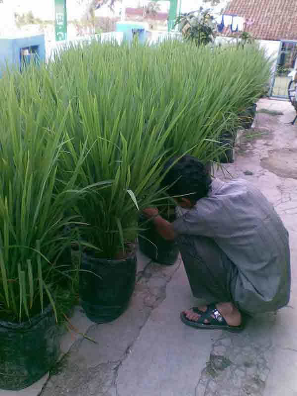 Citra Agro Mandiri