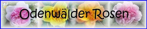 Odenwaelder-Rosen -