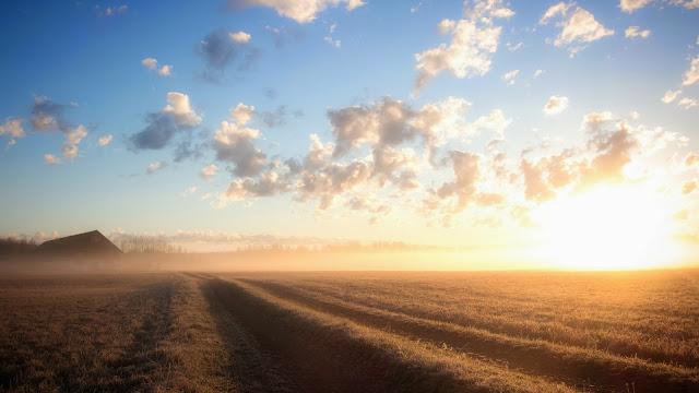 Sunrise Foggy Field HD Wallpaper