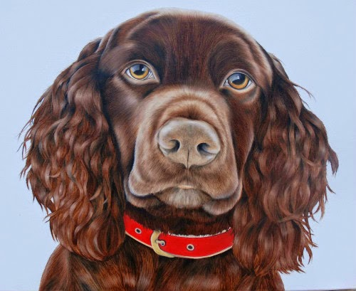 Cocker Spaniel Pet portrait Oil on Canvas