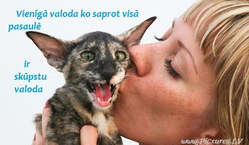 meitene skūpsta dīvainu kaķi
