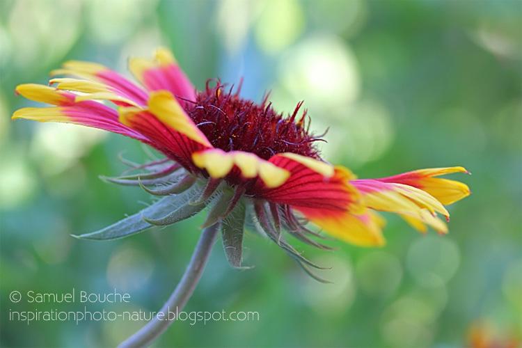 fleur du jardin fleuri macro en été et au printemps