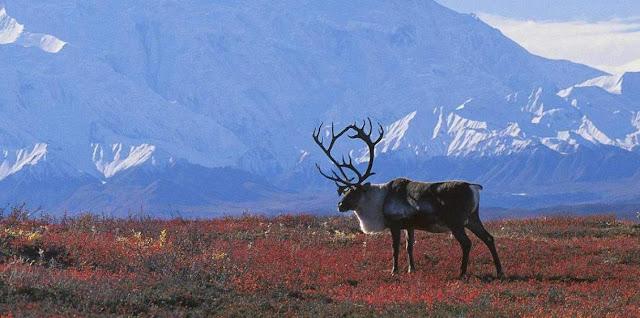 Tundra y biologia