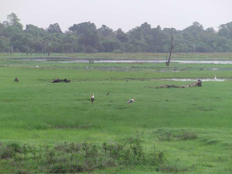 Wasgamuwa National Park Map Pictures of Was...