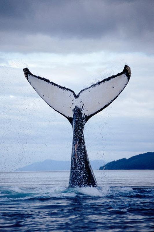 фото китов