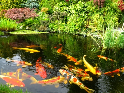 Good feng shui and thai amulets about feng shui related for Good pond fish