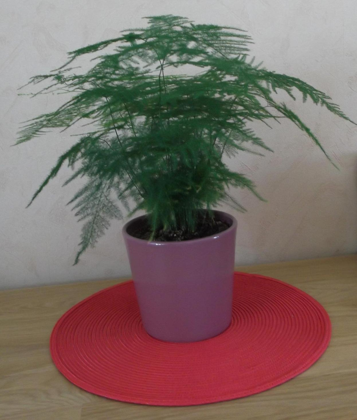 Je fais ce qu 39 il me plait nos plantes for Fougere d interieur plante