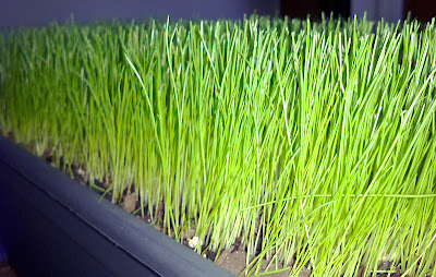Container grass after cutting