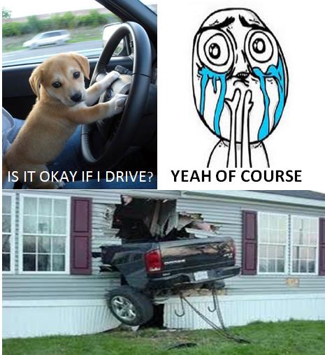 Dog Driving A Car - No Regret