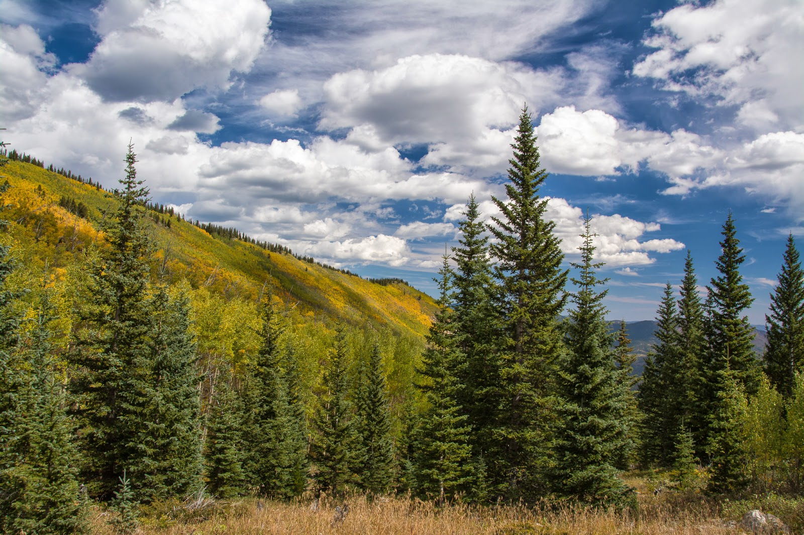Ben Tyler Trail