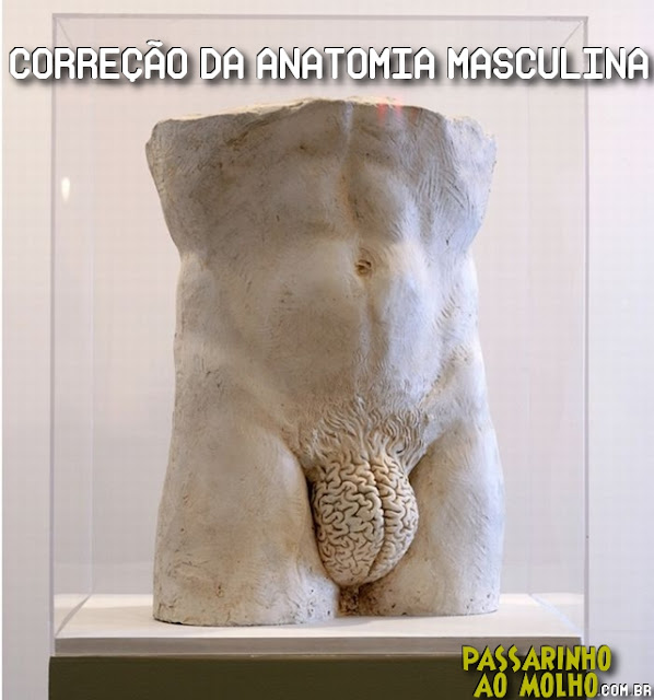 anatomia, cérebro, homens, machismo