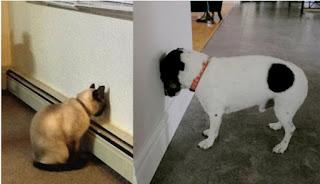 pet press head into a wall, pets, dogs, cats