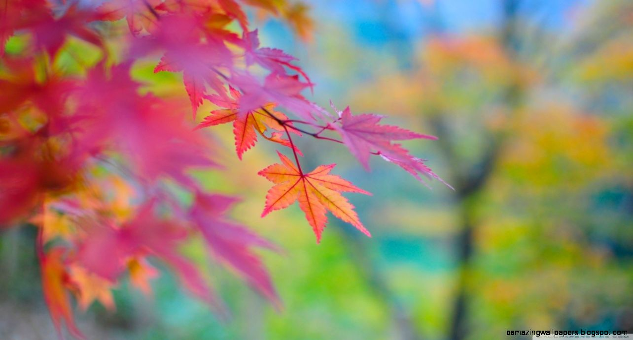 Misc Autumn Colours Japan Maple Japanese Photography Abstract
