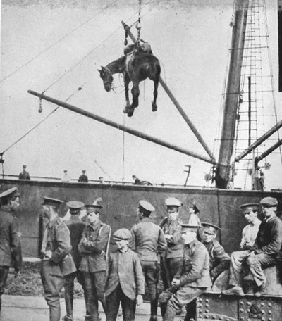 A horse being hoisted aboard ship, unknown date, The War Illustrated