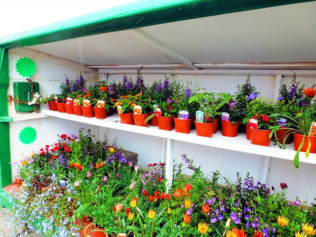 Roadside flower stalls brimming with vibrant blooms. Photo: Zoë Dawes. Unauthorized use is prohibited.