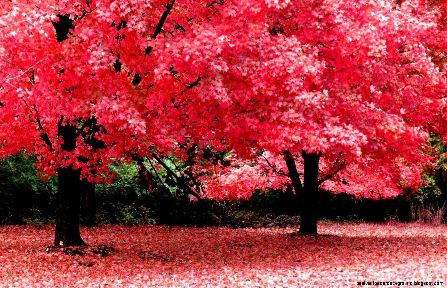 Nature Spring Wallpapers Desktop | Best Wallpaper Background