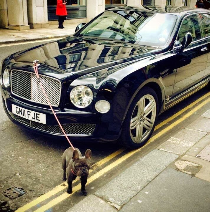 A Dog is Tied to A Bentley Mulsanne's Flying B in London