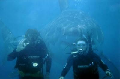 Namorados (homem e mulher) nadando com um tubarão