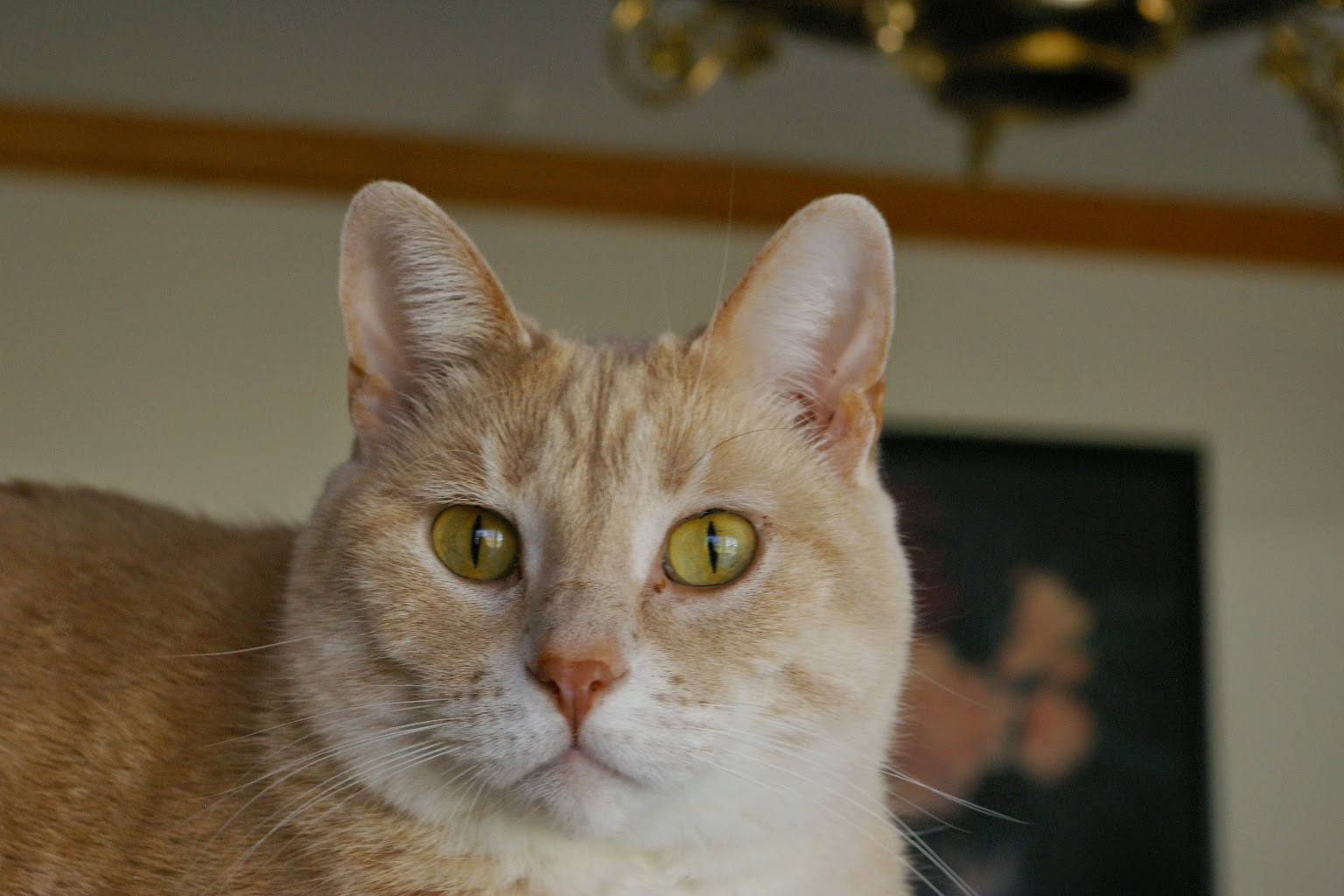 Cat Leaky Eyes Cat Nip