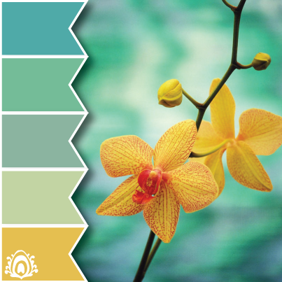 dendrobium  color palette, yellow, blue, green
