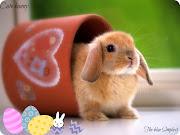 ::Un poco de historia sobre el conejo de pascuas:: conejo editado