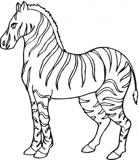 Free Animal Wild Zebra Coloring Sheet To Print Zebra Colouring Pages