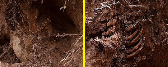 esqueleto bajo arbol new haven