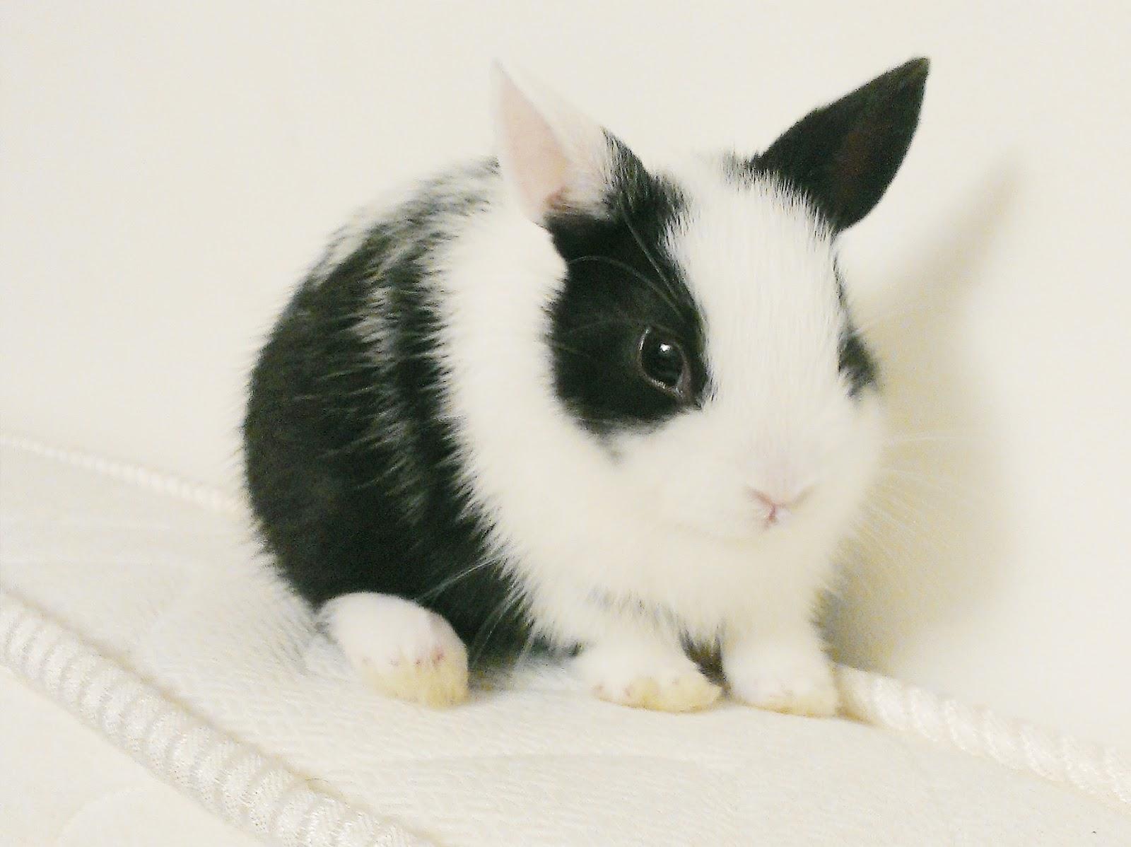 Les avantages d 39 avoir un lapin captain 39 clem - Photo de lapin mignon ...