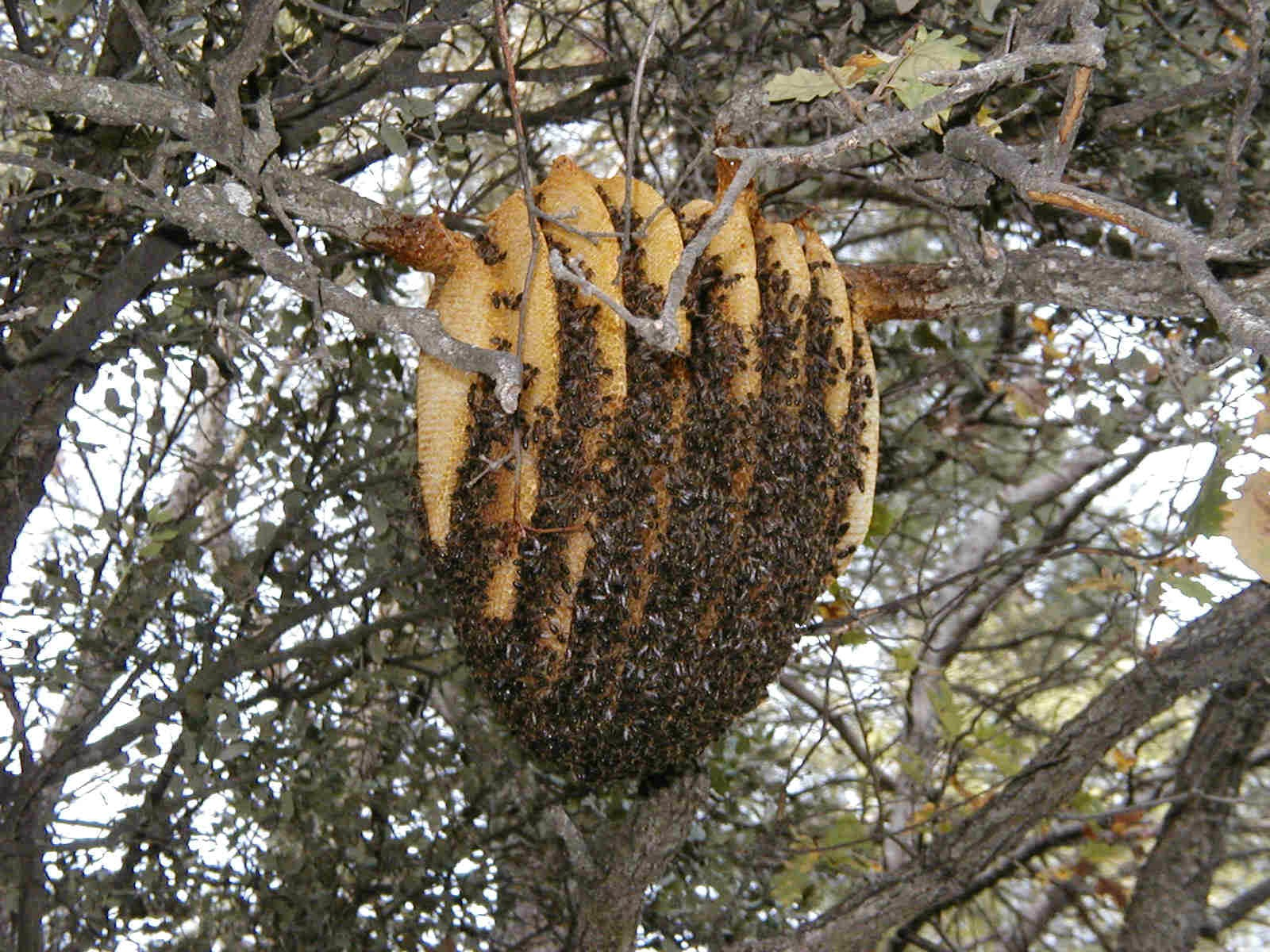 Based On Years Of Bee Colony Observation The Unique Hive Is Designed To Fit Natural Comb Building Tendencies Honey Similar Warre