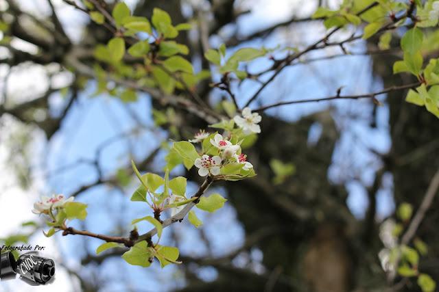 Uma fotografia com o fundo em desfocagem. Um ramo de árvore saliente onde se salientas as flores que rebentam com a primavera.