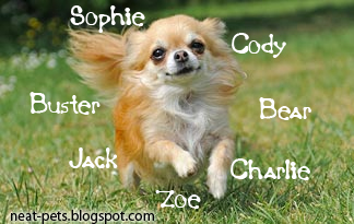 Best Pet Names For Girls