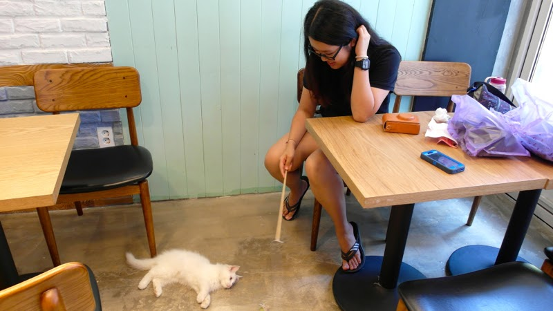 Ewha Summer Studies Table A Cat Cafe Seoul South Korea lunarrive travel blog