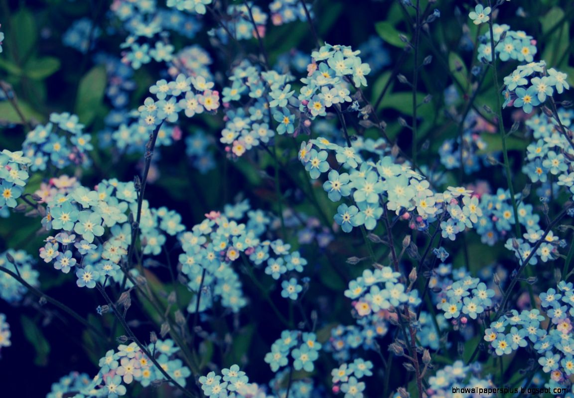 Blue Flowers Tumblr Header