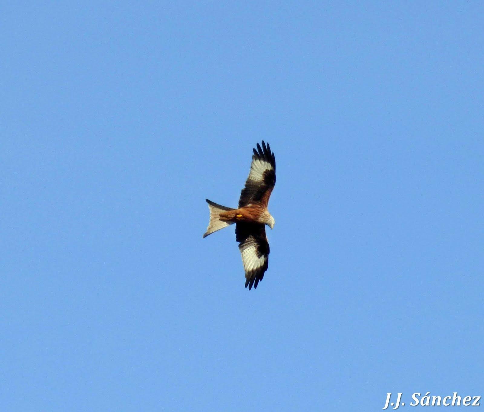 Aves en Montehermoso: Galeria de fotos