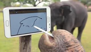 Gajah Asyik Main dengan Galaxy Note