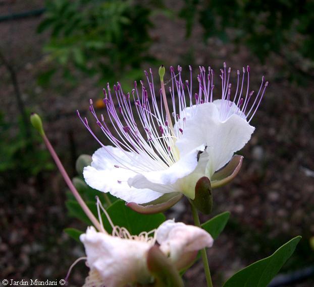 rosas hermosas y brillantes con movimiento para cumpleanos - Imagenes Flores Brillantes