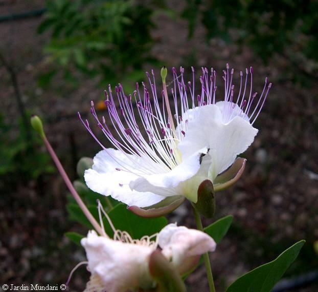 fotos de flores bonitas con movimiento