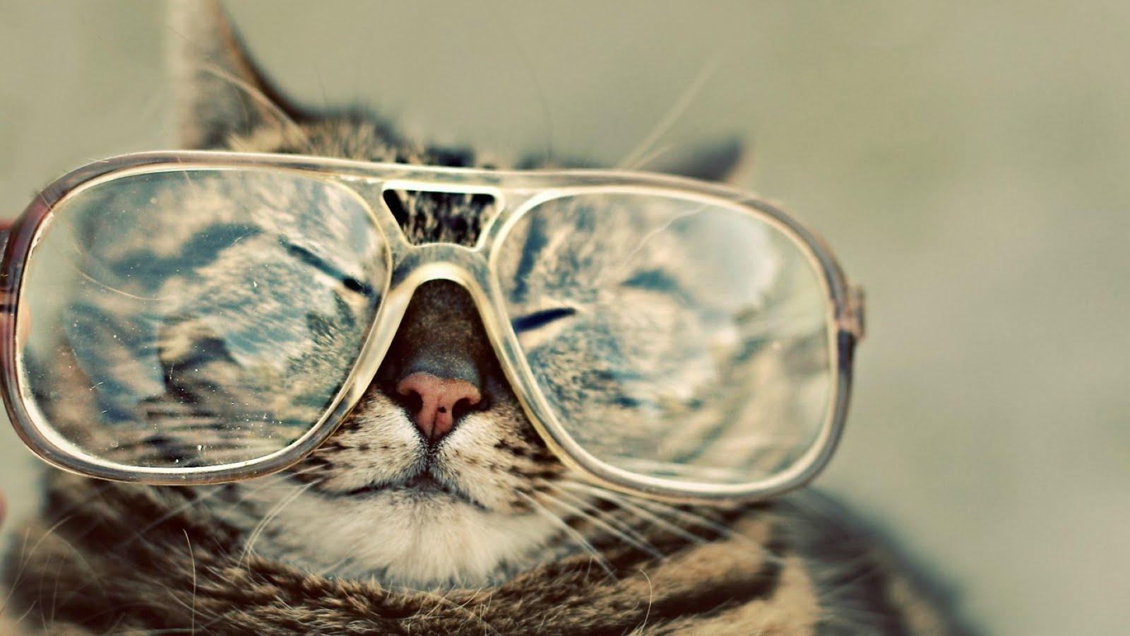 Poza cu pisica pentru click-uri