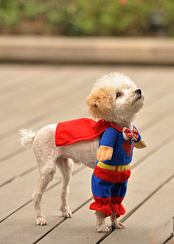 cute super puppy
