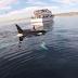 Remando entre orcas