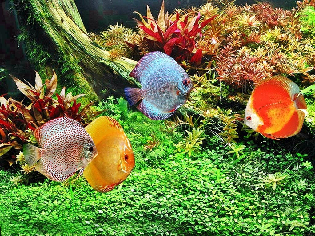 Cara Merawat Ikan Hias Air Laut Supaya Tetap Cantik Fish And