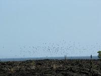 Marine Birds at Punta Moreno