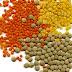 lentils nutrition