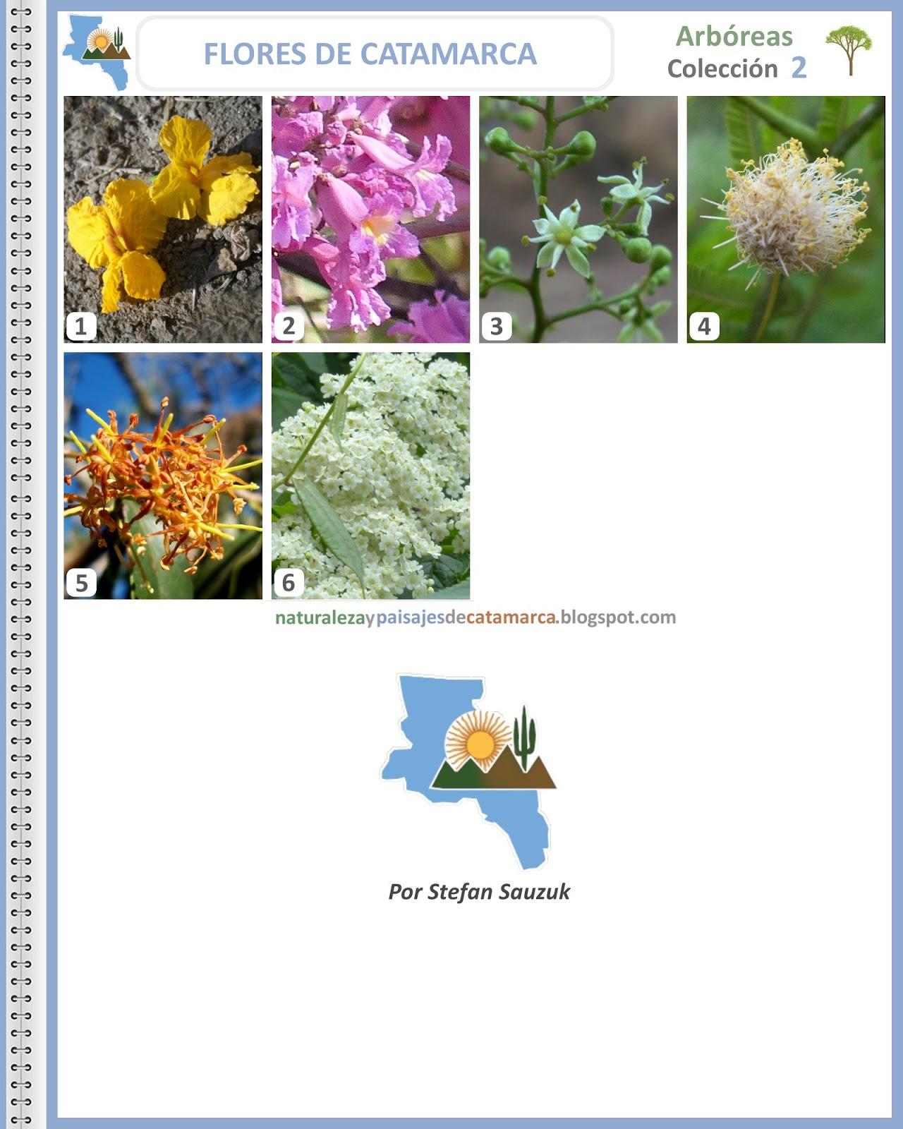 Fotos Y Nombres De Flores Silvestres - Plantas silvestres Mis fotos en InfoJardin Infojardín